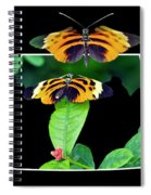 Gentle Butterfly Courtship 01 Out Of Bounds Spiral Notebook