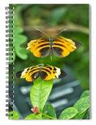 Gentle Butterfly Courtship 01 Spiral Notebook