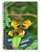 Gentle Butterfly Courtship 02 Spiral Notebook