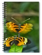 Gentle Butterfly Courtship 03 Spiral Notebook