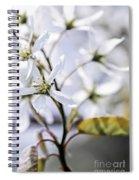 Gentle White Spring Flowers Spiral Notebook