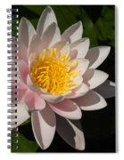 Gently Pink Waterlily In The Hot Mediterranean Sun Spiral Notebook
