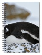 Gentoo Penguin On Nest Spiral Notebook