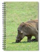 Genuflect Spiral Notebook