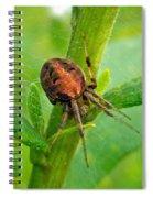 Genus Araneus Orb Weaver Spider - Brown And Orange Spiral Notebook