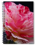 George Burns Floribunda Rose Spiral Notebook