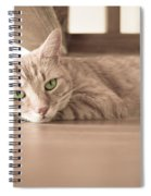 George The Cat Spiral Notebook