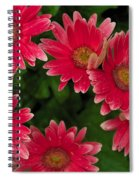 Gerber Daisies Cluster Spiral Notebook