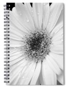 Gerber Daisies In Black And White Spiral Notebook