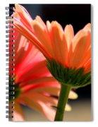 Gerber Daisies Spiral Notebook