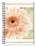 Gerber Daisy 1 Spiral Notebook