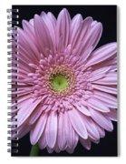 Gerber Daisy Flower Spiral Notebook