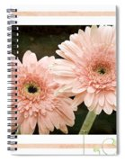 Gerber Daisy Love 5 Spiral Notebook