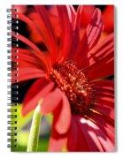 Gerber Daisy Shadows Spiral Notebook