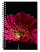 Gerbera Daisy 2 Spiral Notebook