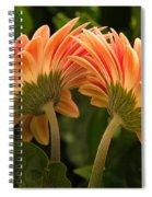 Gerbera Daisy Twins Spiral Notebook