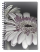 Gerbera Dream 1 Spiral Notebook