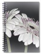 Gerbera Dream 2 Spiral Notebook