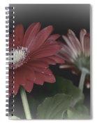Gerbera Dream 3 Spiral Notebook
