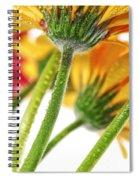 Gerbera Flowers Spiral Notebook