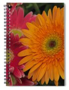 Gerbera Spiral Notebook