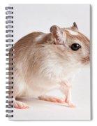 Gerbil Gerbillinae Spiral Notebook