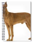 German Or Standard Pinscher Spiral Notebook