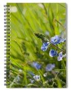 Germander Speedwell Spiral Notebook