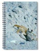 Ghost Crab Spiral Notebook