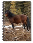 Ghost Forest Stallion Spiral Notebook