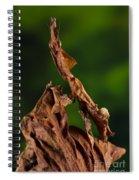 Ghost Or Dead Leaf Mantis Spiral Notebook