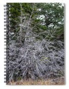 Ghost Trees 1 Spiral Notebook