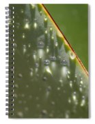 Giant Agave Abstract 4 Spiral Notebook