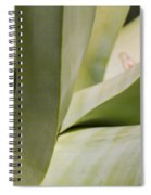 Giant Agave Abstract 8 Spiral Notebook