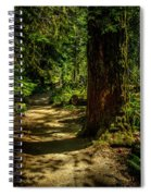 Giant Douglas Fir Trees Collection 2 Spiral Notebook