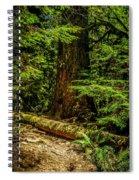 Giant Douglas Fir Trees Collection 3 Spiral Notebook