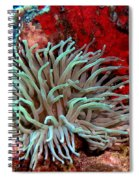 Giant Green Sea Anemone Against Red Coral Spiral Notebook