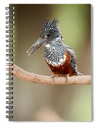Giant Kingfisher Megaceryle Maxima Spiral Notebook