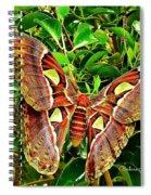 Giant Moth Spiral Notebook