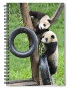 Giant Panda Cubs Spiral Notebook