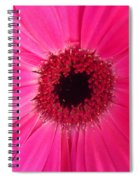 Flower Photography - Giant Pink Gerbera Daisy Spiral Notebook