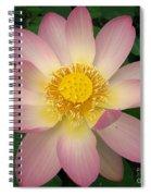 Giant Pink Lotus Spiral Notebook
