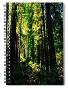 Giant Redwood Forest Spiral Notebook