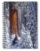 Giant Sequoia Trees Sequoiadendron Spiral Notebook