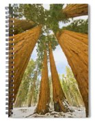 Giant Sequoias And First Snow Spiral Notebook