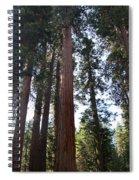 Giant Sequoias - Yosemite Park Spiral Notebook