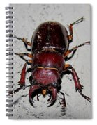 Giant Stag Beetle Spiral Notebook
