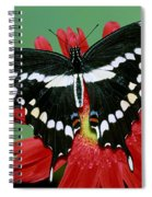 Giant Swallowtail Butterfly Spiral Notebook
