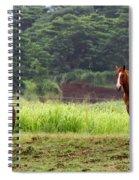 Giddy Up Horsy By Diana Sainz Spiral Notebook