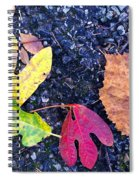 Gift From The Trees Spiral Notebook